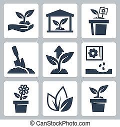 rozwój, roślina, wektor, komplet, ikony
