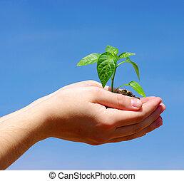 rozwój, roślina, zielony