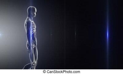 ruch, chód, rentgenowski, powolny