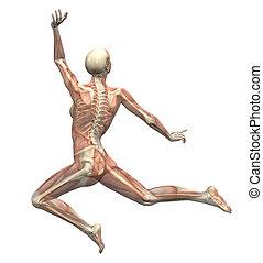 ruch, kobieta, anatomia, -, skaczący