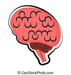rys, brain., odizolowany, ludzki, barwny