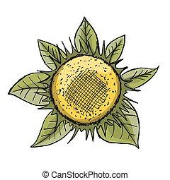 rys, słonecznik, projektować, twój