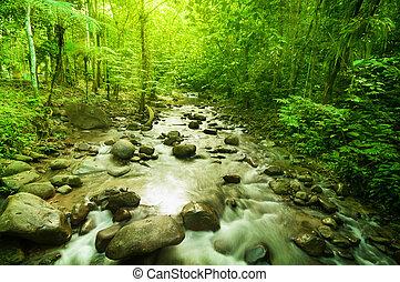rzeka, dżungla