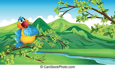 rzeka, wszerz, papuga