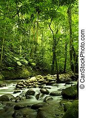 rzeka, zielony las