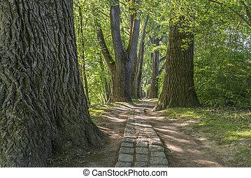 słońce, liście, opowiadanie, zielony las, ścieżka, przez, wróżka, regensburg, lustrzany