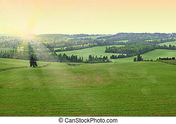 słoneczko., rano, pole, świeży, wcześnie, rolnik