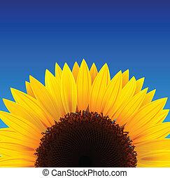 słonecznik, tło