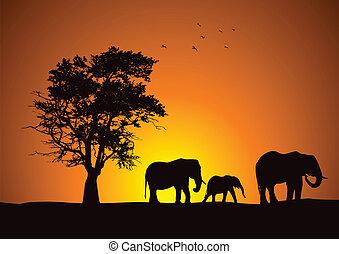 safari, słonie