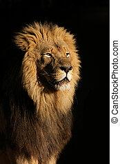 samiec, cielna, lew, afrykanin