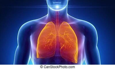 samiec, oddechowy system, skandować