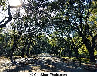 savannah, usa, droga, georginia, dąb, plantacja, formułować, łuk, wormsloe, historyczny, liniowany