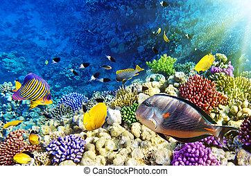 sea., fish, egipt, czerwony koral