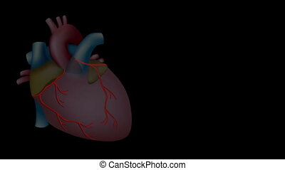 serce, ożywienie, hd, atak