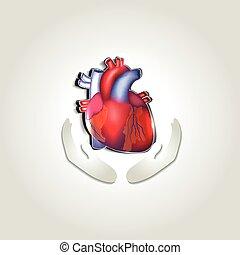 serce, symbol, zdrowie, ludzki, troska