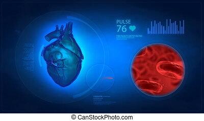 serce, wystawa, medyczny, ludzki, bl