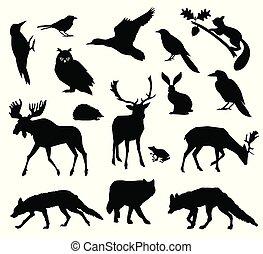 silhouette., europejczyk, forest., żyjący, ikona, park., krajowy, wektor, komplet, lesisty teren, zwierzęta