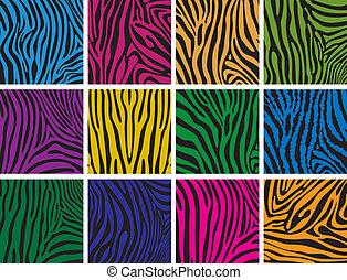 skóra, barwny, budowy, komplet, zebra, wektor
