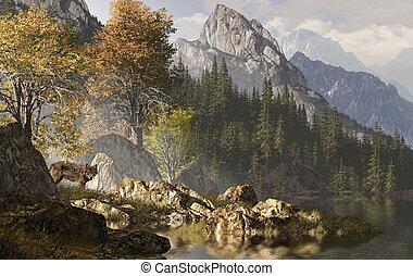 skalisty, wilk, góry
