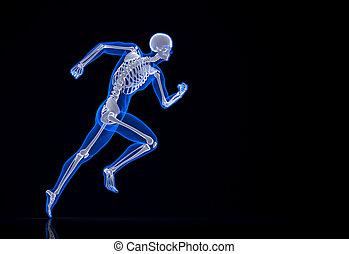 skeleton., wyścigi, zawiera, path., strzyżenie