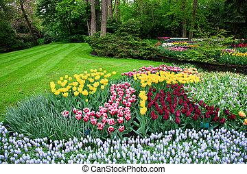 skoczcie kwiecie, barwny, tulipan