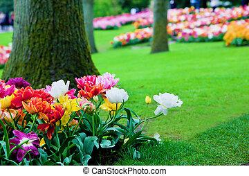 skoczcie kwiecie, ogród, barwny, park