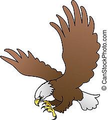 skrzydełka, ilustracja, orzeł, rozpostarty, łysy