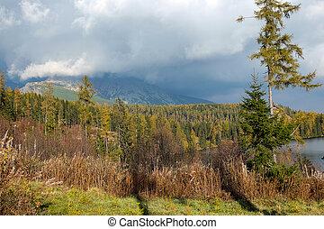 slovakia, tatra, pleso, piękny, -, jezioro, scena, natura, góra, strbske