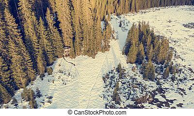 snow., antena, pokryty, las, prospekt, zima, łąka