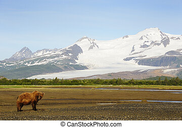 snowcapped, siwy, mountais, krajobraz, niedźwiedź