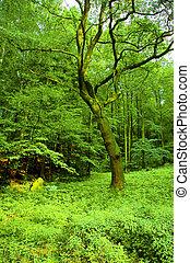 soczysty, las
