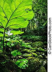 soczysty, roślinność
