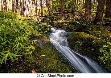 soczysty, spokojny, wodospad, zielony las, spokój