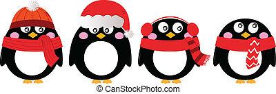 sprytny, biały, komplet, odizolowany, pingwin