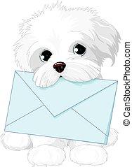 sprytny, dostarczając, koperta, pies, poczta