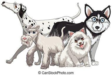 sprytny, rodzaj, różny, psy