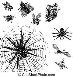 starożytny, insekty, komplet, (vector)