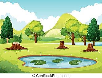 staw, mały, las, scena