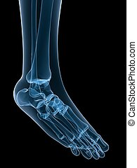 stopa, szkieletowy