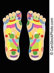 stopa, układ, -, akupunktura