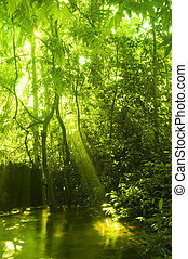 stream., zielony las