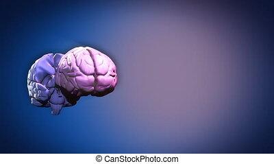 strony, mózg, highlighted