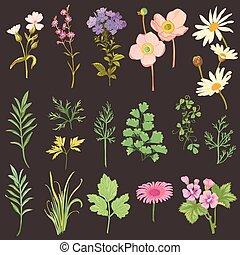 styl, komplet, -, ręka, akwarela, zioła, wektor, pociągnięty, kwiaty