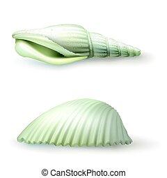 styl, symbole, ilustracja, seashell, realistyczny, wektor, majchry