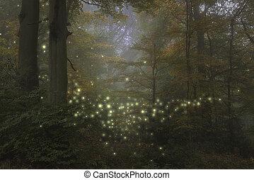 styl, wizerunek, czas, scena, kaprys, oszałamiający, las, noc, fireflies, krajobraz