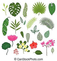 stylizowany, komplet, liście, tropikalny, flowers., rośliny