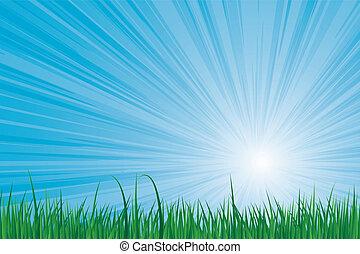 sunburst, trawa, zielony