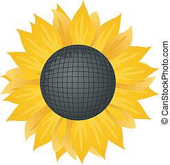 sunflower., ilustracja, wektor