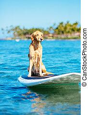surfing, pies