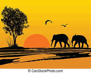 sylwetka, afryka, słonie